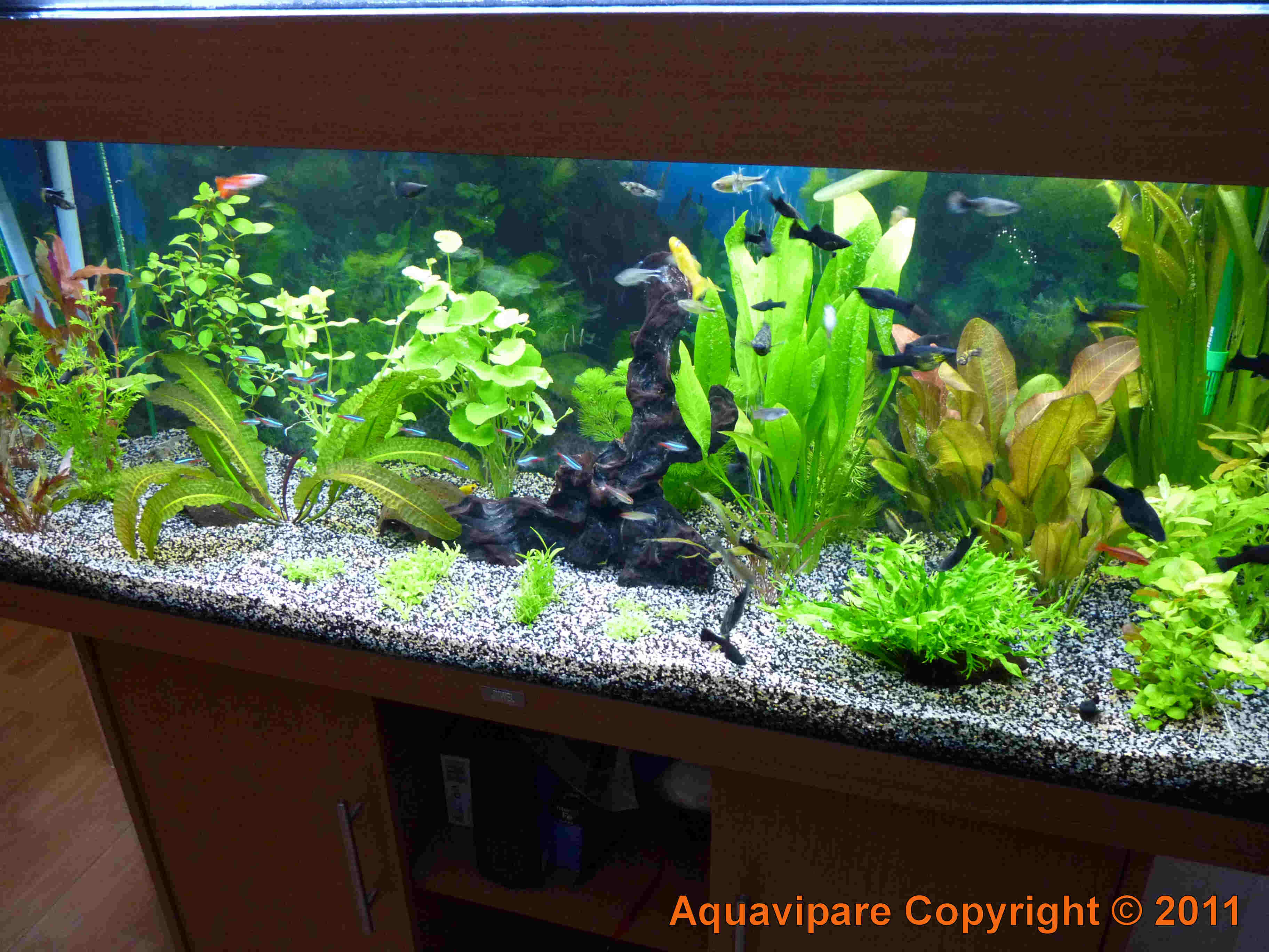 décoration aquarium sans eau