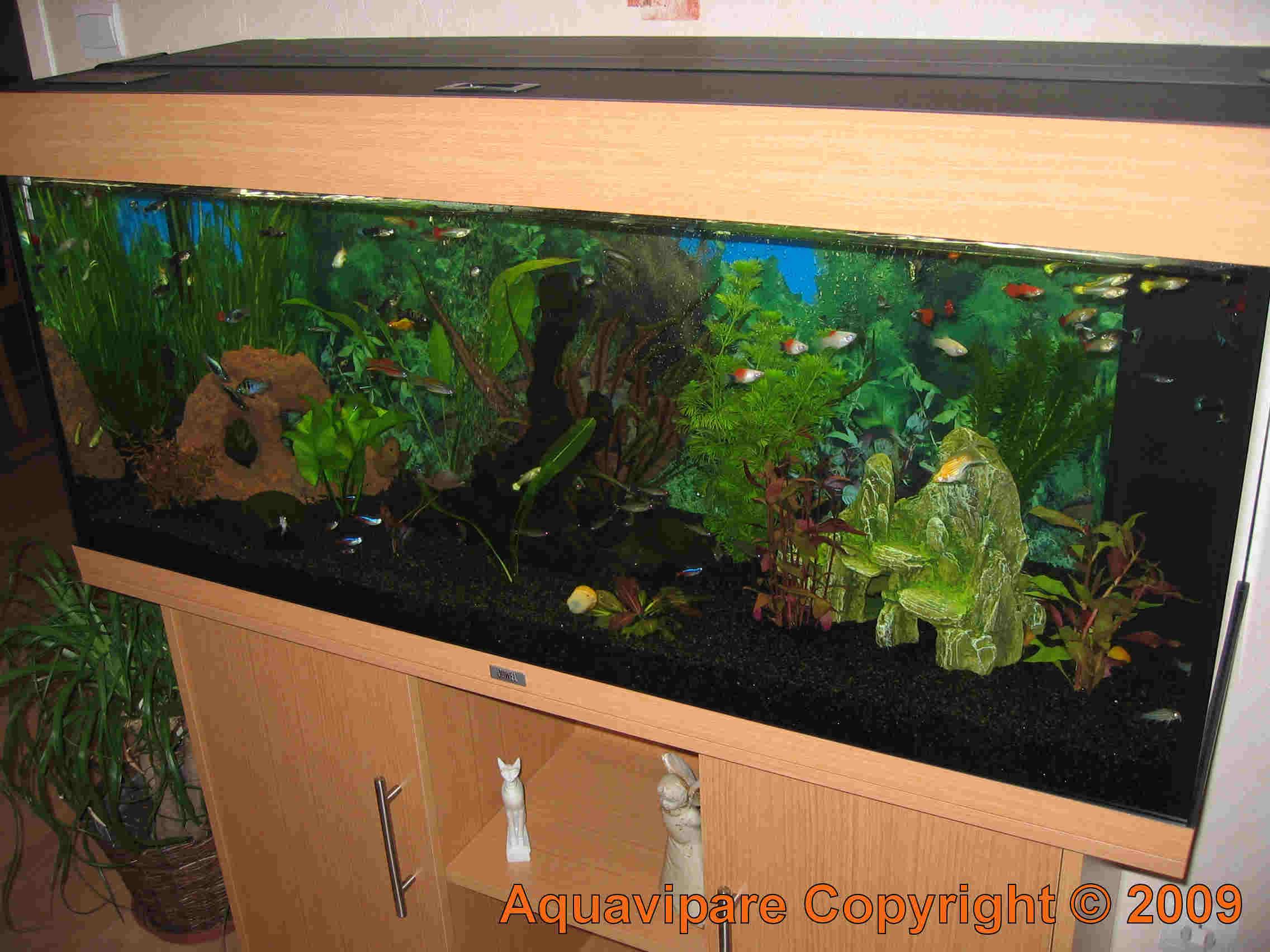nouvelles photos aquarium juwel rio 240. Black Bedroom Furniture Sets. Home Design Ideas